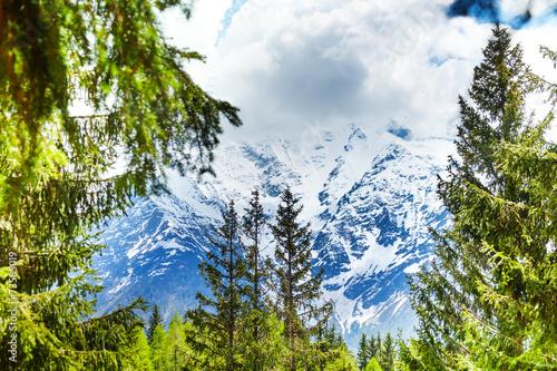 Mont Blanc, Alps view through fir-trees © Sergey Novikov