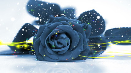 wedding loop background, blue rose and particle element