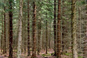 Leśny spacer 7