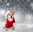 canvas print picture - hund im winter mit weihnachtskostüm