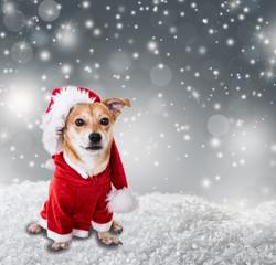 hund im winter mit weihnachtskostüm