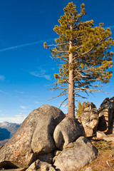 Pine and Boulders in Yosemite