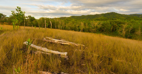 The deadwood stranded on the grassland  in Borneo