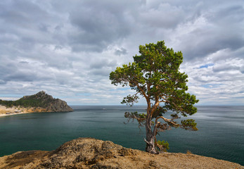 Lonely pine on the lake Baikal