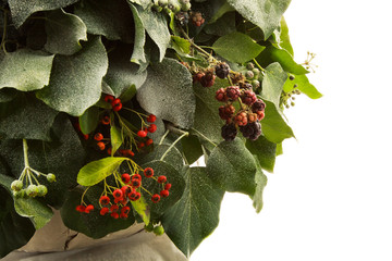 blackberry New Year tree