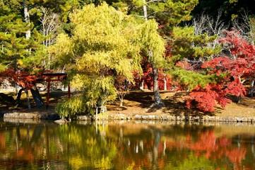 東大寺 鏡池の紅葉