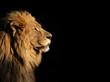 Leinwanddruck Bild - Portrait of a big male African lion on black