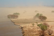Severe sand storm with windblown trees