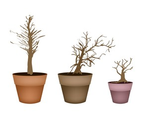 Three Abstract Isometric Brown Trees in Flower Pot