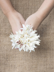 Hand hold bunch of white flower