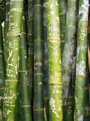 Green bamboo messages