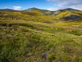Los Cervunales en la Sierra de Gredos