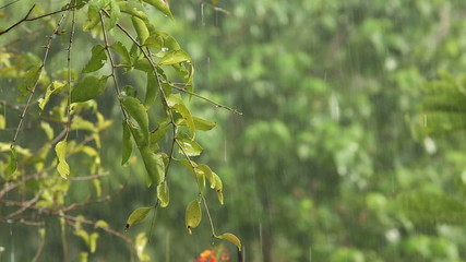 rain falls in the tropical jungle and the sun shines