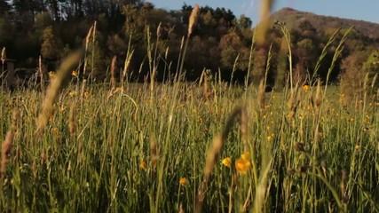 Fili d'erba nel vento