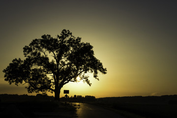 Sunset tree at a closed road