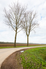 Two bare trees in a roadside