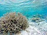 Korallenriff mit Fischen