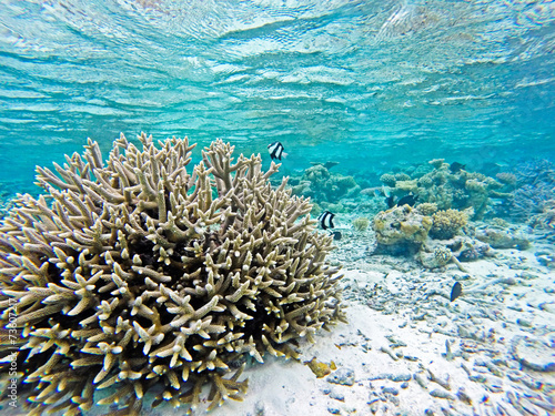 Korallenriff mit Fischen - 73607217