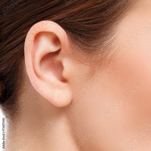 ear closeup - 73607640