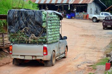 Agriculture Trannsport Cabbage at Phu Hin Rong Kla National Park