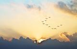 Fototapeta Klucz ptaków na tle zachodzącego słońca