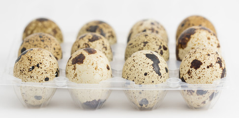 Quail eggs on egg box, side view, focus on front