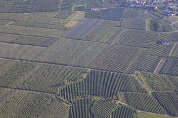 Obstplantagen im Vinschgau