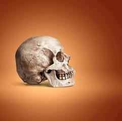 one human skull