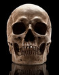 canvas print picture - skull-close mouth