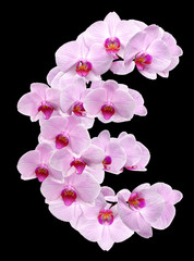 letter EUR from orchid flowers
