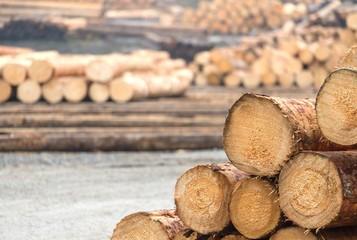 Sammelplatz für Bäume im Sägewerk