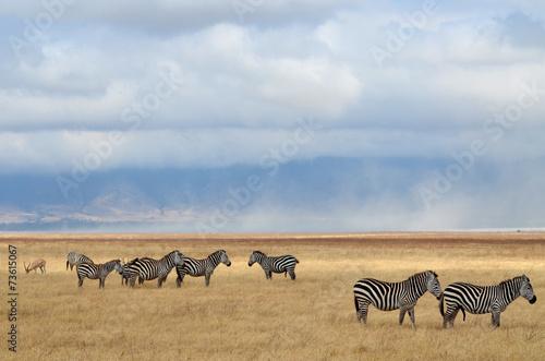 In de dag Antilope Zebras and antelope