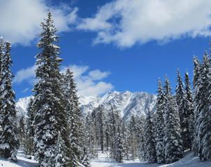 Winter Scene - Rocky Mountains