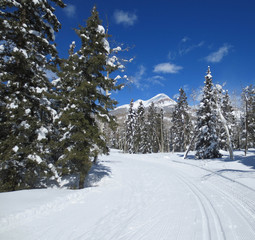Cross Country ski trail and Engineer mountain