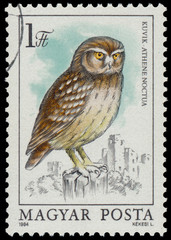 Stamp shows image of a Little Owl