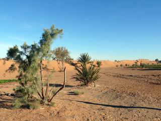 Vegetation in a Saharan Garden