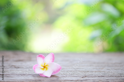 Poster Frangipani Frangipani flower on wooden table