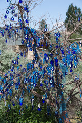 Evil eye in tree behind Uchisar Castle in Cappadocia,