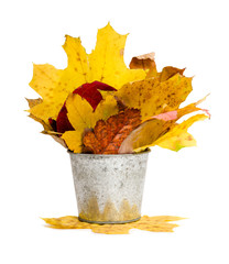 tin bucket full of leaves isolated