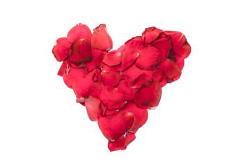 Heart shape roses flower card on white background
