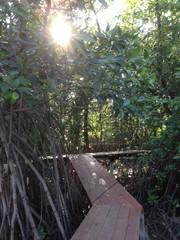 walk way to mangroove