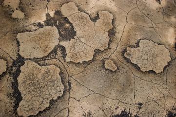 Abstract stone map Galapagos