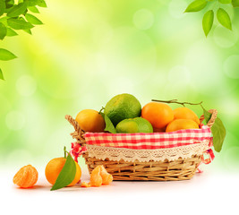 Tangerine inside basket with clipping path - 2