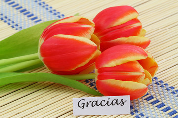 """Gracias"" card,(thank you in Spanish), with red tulips"