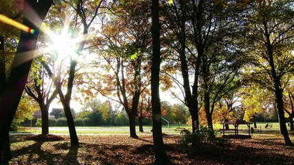 Autumn in Beautiful Park