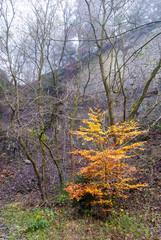Baum mit Herbstlaub im Steinbruch am Bromberg