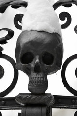 snowy skull