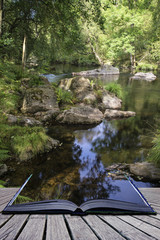 Beautiful stream flowing through forest landscape in Summer conc