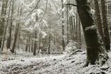 Romantic winter scene in the forest
