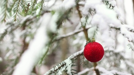 Christmas decoration: red globe in tree covered in snow